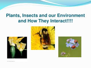 Plants, Insects and our Environment and How They Interact!!!!