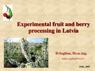 Experimental fruit and berry processing in Latvia