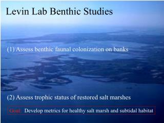 (1) Assess benthic faunal colonization on banks (2) Assess trophic status of restored salt marshes