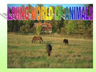 LIVING WORLD OF ANIMALS