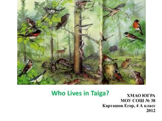 Who Lives in Taiga?