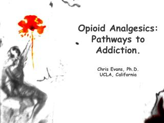 Opioid Analgesics:  Pathways to  Addiction. Chris Evans, Ph.D. UCLA, California