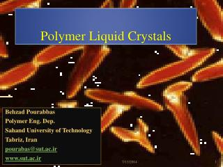 Polymer Liquid Crystals