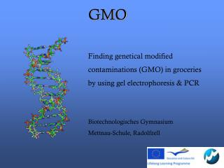 Finding genetical modified  contaminations (GMO) in groceries  by using  gel electrophoresis & PCR Biotechnologisches G