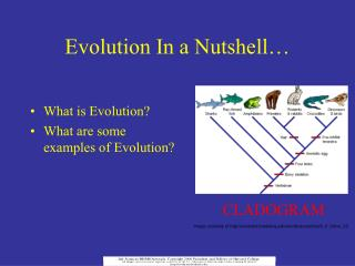 Evolution In a Nutshell…