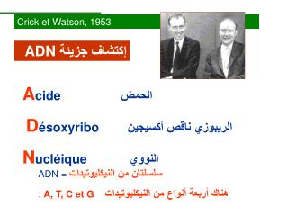 Crick et Watson, 1953