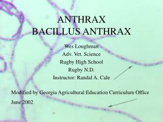 ANTHRAX BACILLUS ANTHRAX