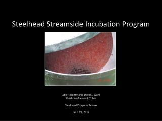 Steelhead Streamside Incubation Program