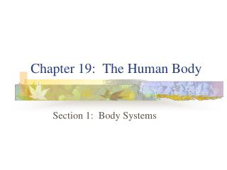 Chapter 19:  The Human Body