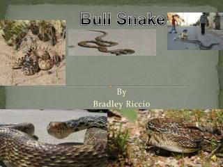 By Bradley  Riccio