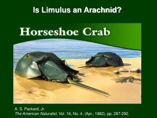 Is Limulus an Arachnid?