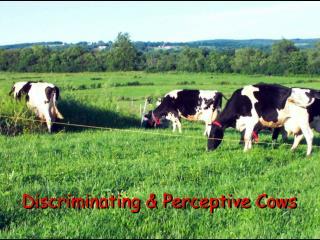 Discriminating & Perceptive Cows