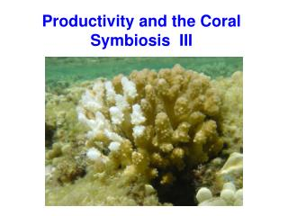 Productivity and the Coral Symbiosis  III