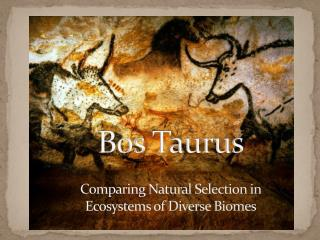 Bos  Taurus Comparing Natural Selection in Ecosystems of Diverse Biomes