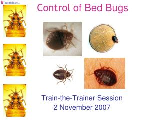 Control  of Bed Bugs