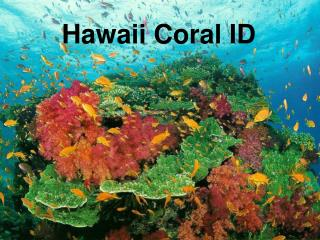 Hawaii Coral ID