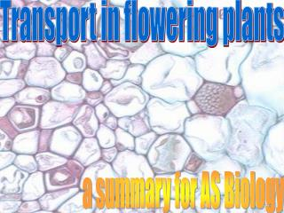 Transport in flowering plants