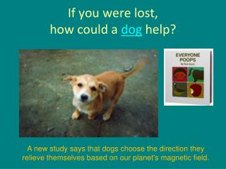 If you were lost,  how could a  dog  help?