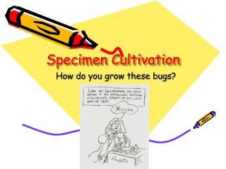 Specimen Cultivation