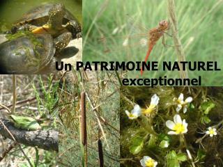 Un PATRIMOINE NATUREL exceptionnel