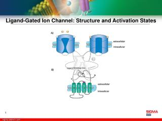 Ligand-Gated Ion Channel: Structure and Activation States