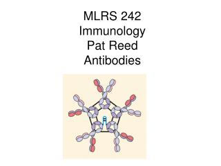 MLRS 242 Immunology Pat Reed Antibodies