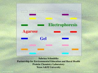 Real Life Examples of Uses for Electrophoresis