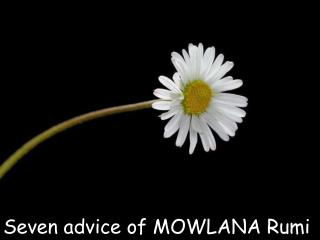 Seven advice of M OW LANA  Rumi