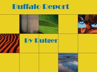 Buffalo Report