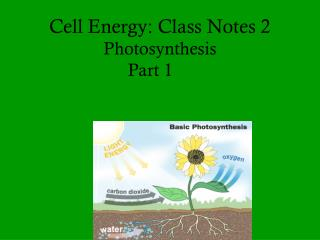 Cell Energy: Class Notes 2 Photosynthesis  Part 1
