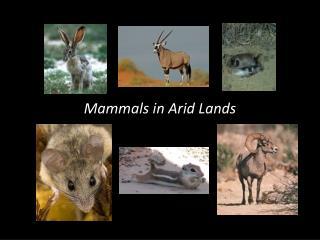 Mammals in Arid Lands