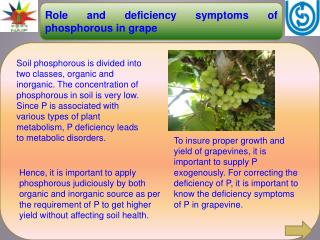 Role and deficiency symptoms of phosphorous in grape