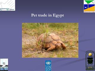 Pet trade in Egypt
