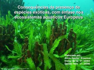Consequências da presença de espécies exóticas, com ênfase nos ecossistemas aquáticos Europeus
