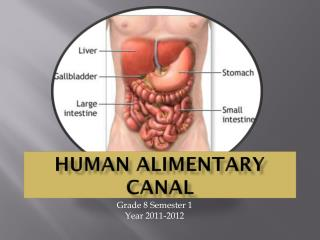 Human Alimentary Canal
