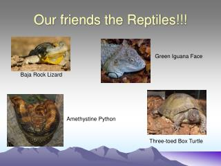 Our friends the Reptiles!!!