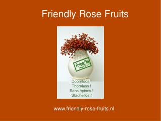 Friendly Rose Fruits