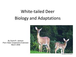 White-tailed Deer Biology and Adaptations