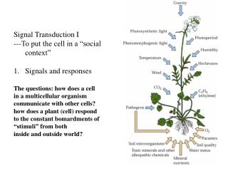 "Signal Transduction I ---To put the cell in a ""social context"" Signals and responses The questions: how does a cell  in"