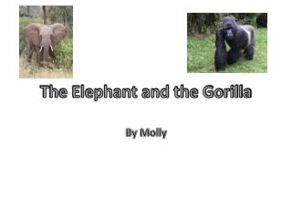 The Elephant and the Gorilla