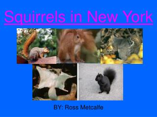 Squirrels in New York
