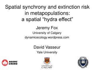 "Spatial synchrony and extinction risk in metapopulations:  a spatial ""hydra effect"""