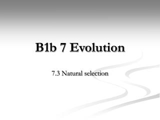 B1b 7 Evolution