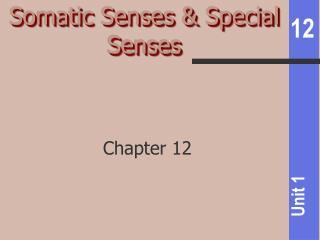 Somatic Senses & Special Senses