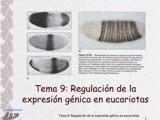 Tema 9: Regulación de la expresión génica en eucariotas