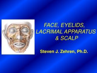 FACE, EYELIDS,  LACRIMAL APPARATUS               & SCALP Steven J. Zehren, Ph.D.