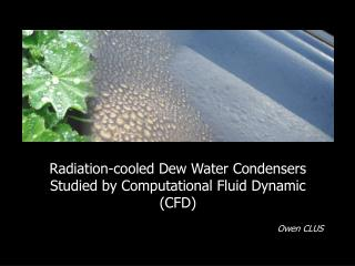 Radiation-cooled Dew Water Condensers Studied by Computational Fluid Dynamic (CFD)