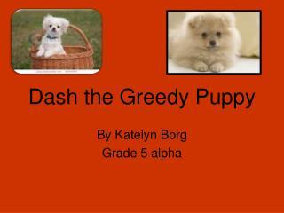 Dash the Greedy Puppy