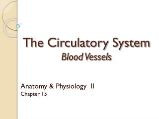 The Circulatory System Blood Vessels