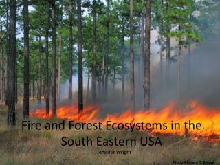 Fire and Forest Ecosystems in the South Eastern USA